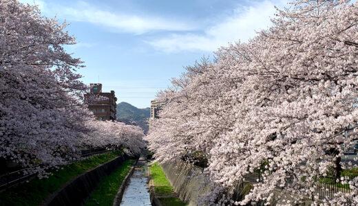 【2022年版】北九州市の桜の名所と花見スポット