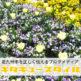 [響灘緑地(グリーンパーク)]福岡県最大級のバラ園が大人気の巨大な公園